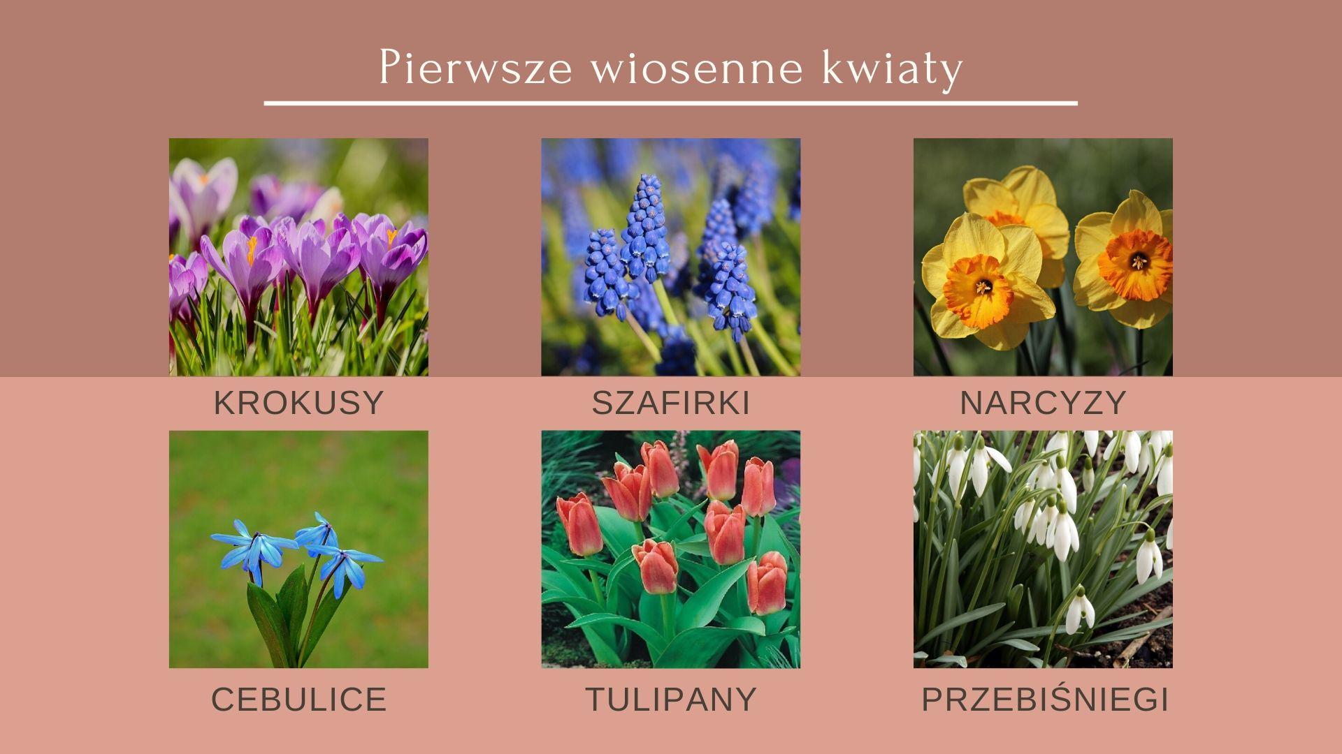 Pierwsze Wiosenne Kwiaty Ktore Beda Cieszyly Oko Wczesna Wiosna Cebule Kwiatowe Pl